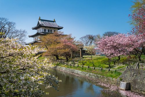 Điểm đến du lịch Nhật Bản mùa hoa anh đào Nhật Bản 2019