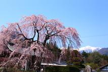 Điểm đến du lịch Nhật Bản mùa hoa đào nở