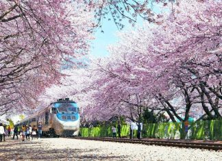 Kinh nghiệm tour anh đào Nhật Bản cực hấp dẫn